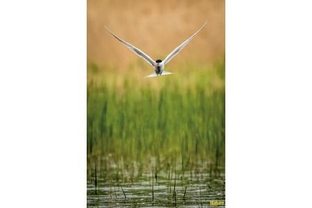 Deuxième prix catégorie oiseaux - Claude Gervais