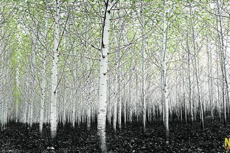 Premier prix catégorie forêt - Lorraine Saint-Arnaud